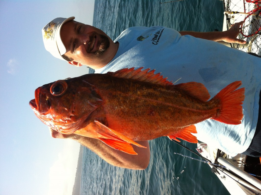 Nice Bycatch while fishing Lingcod , Nice 8Lb RED