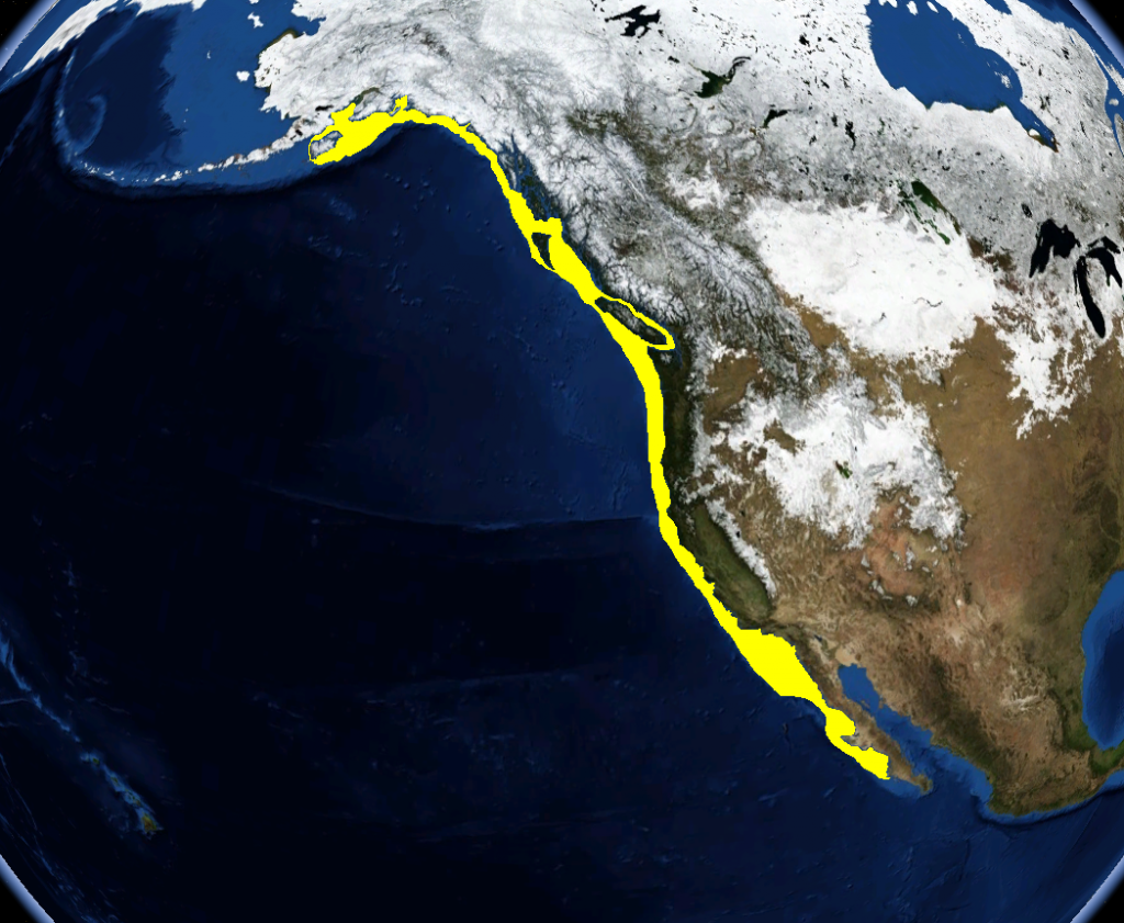 the yellow area indicates the Ling cods range of where they can be caught
